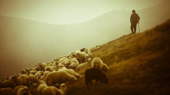 گذشته عشایر، معایب، مزایا و تمام بایدهای زندگی عشایری در دوران معاصر