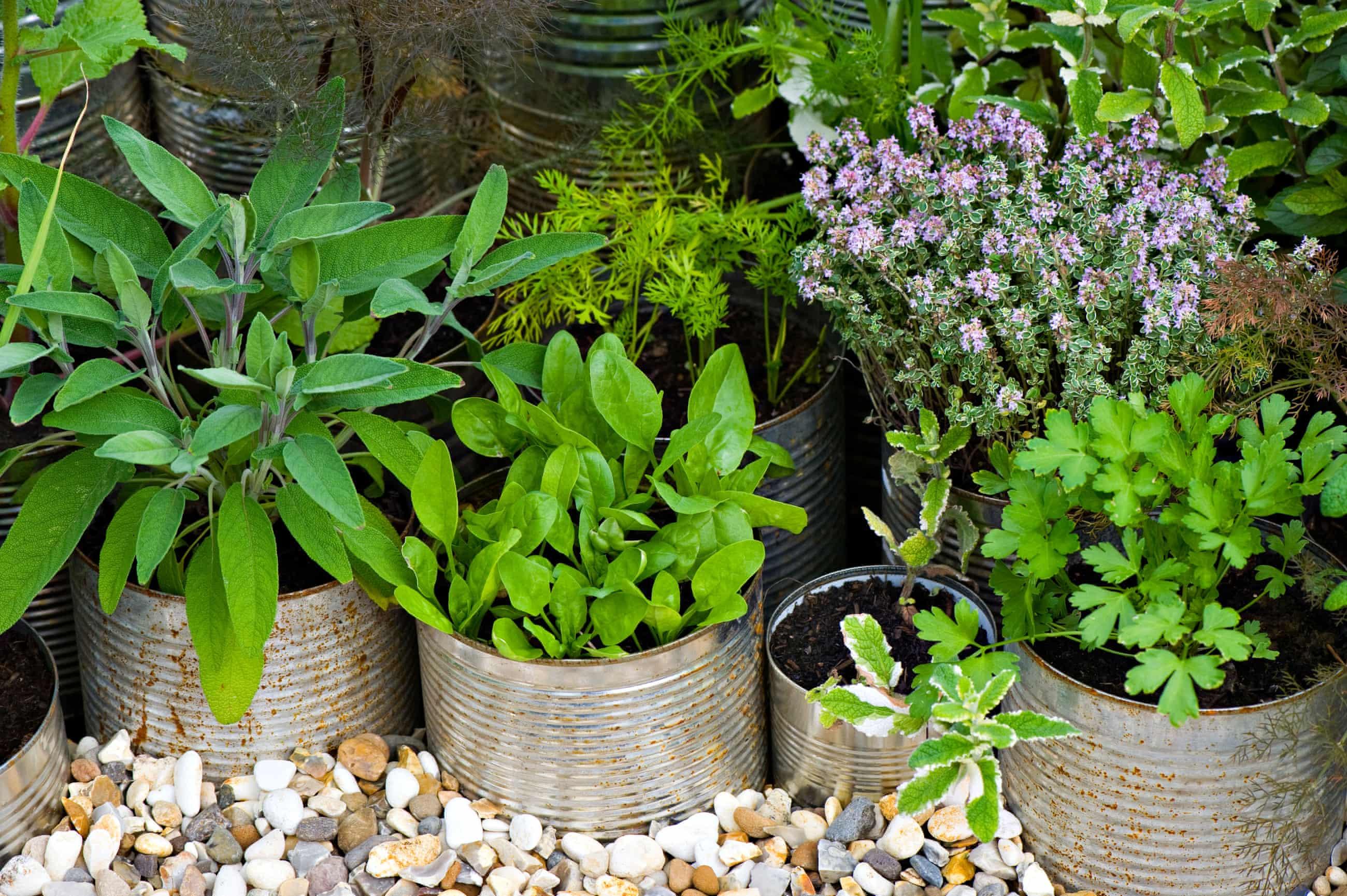 قفسه گیاهان دارویی-باغچه گیاهان یا جعبه کمکهای اولیه