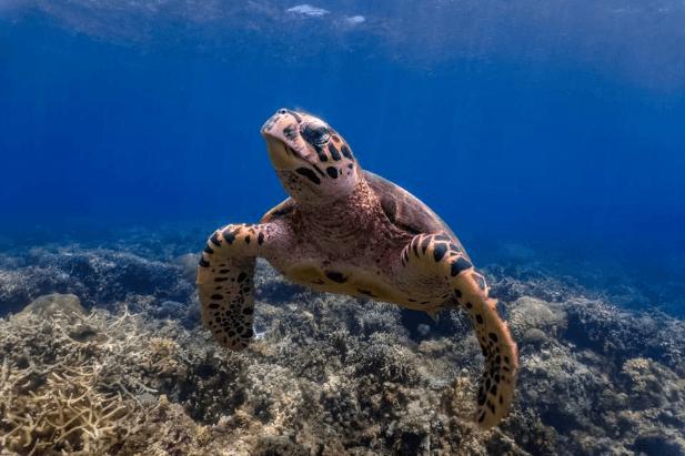 احتمال خطر انقراض