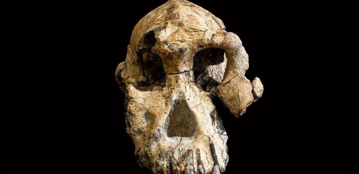 جمجمه 3.8 میلیون ساله