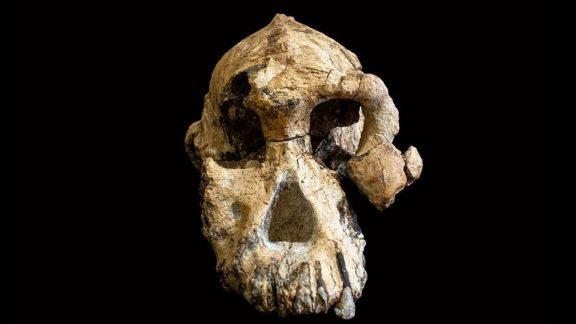 جمجمه 3.8 میلیون ساله چهره جدیدی را بر روی نیاکان ناشناخته انسان میگذارد
