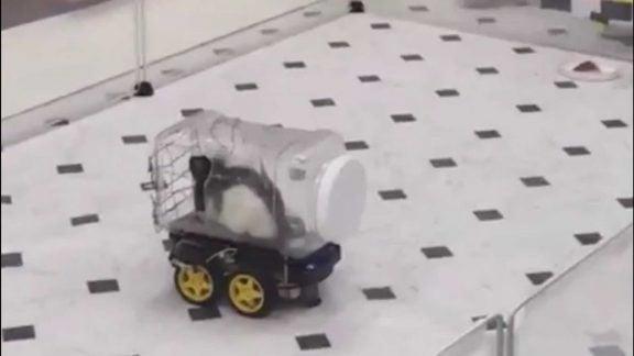 نتایج تحقیقات جدید نشان می دهد که موشها عاشق رانندگی هستند!