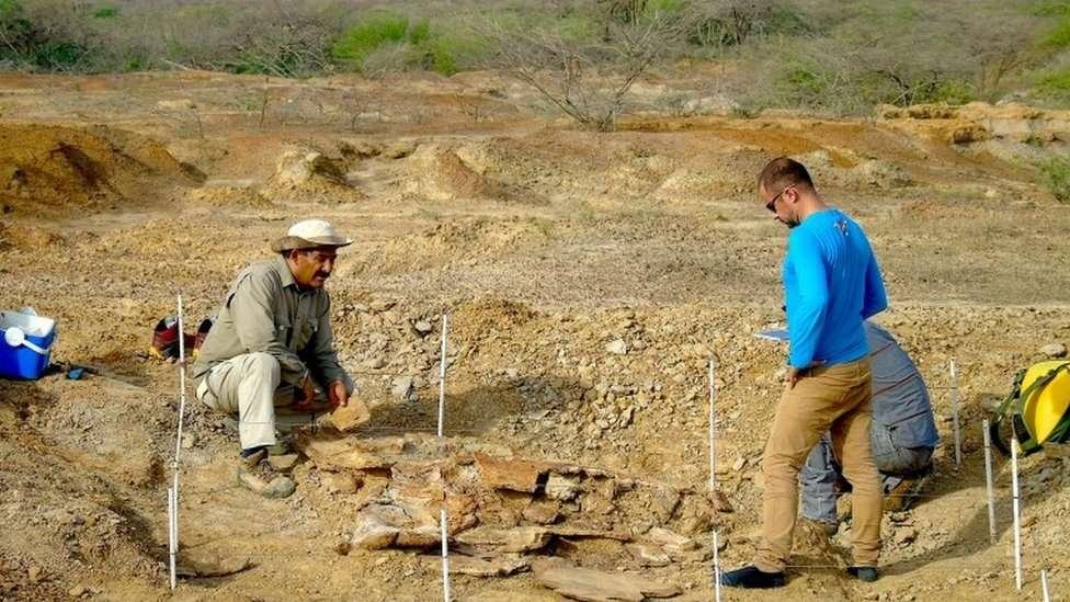 کشف فسیلهای لاکپشت غولپیکر - محل حفاری
