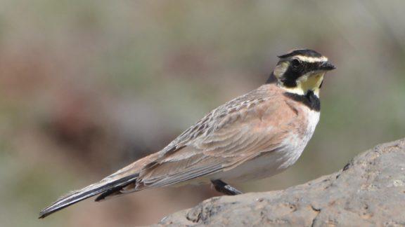 فسیل پرنده 46000 ساله منجمد